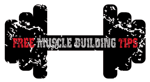 Free Muscle Building Tips
